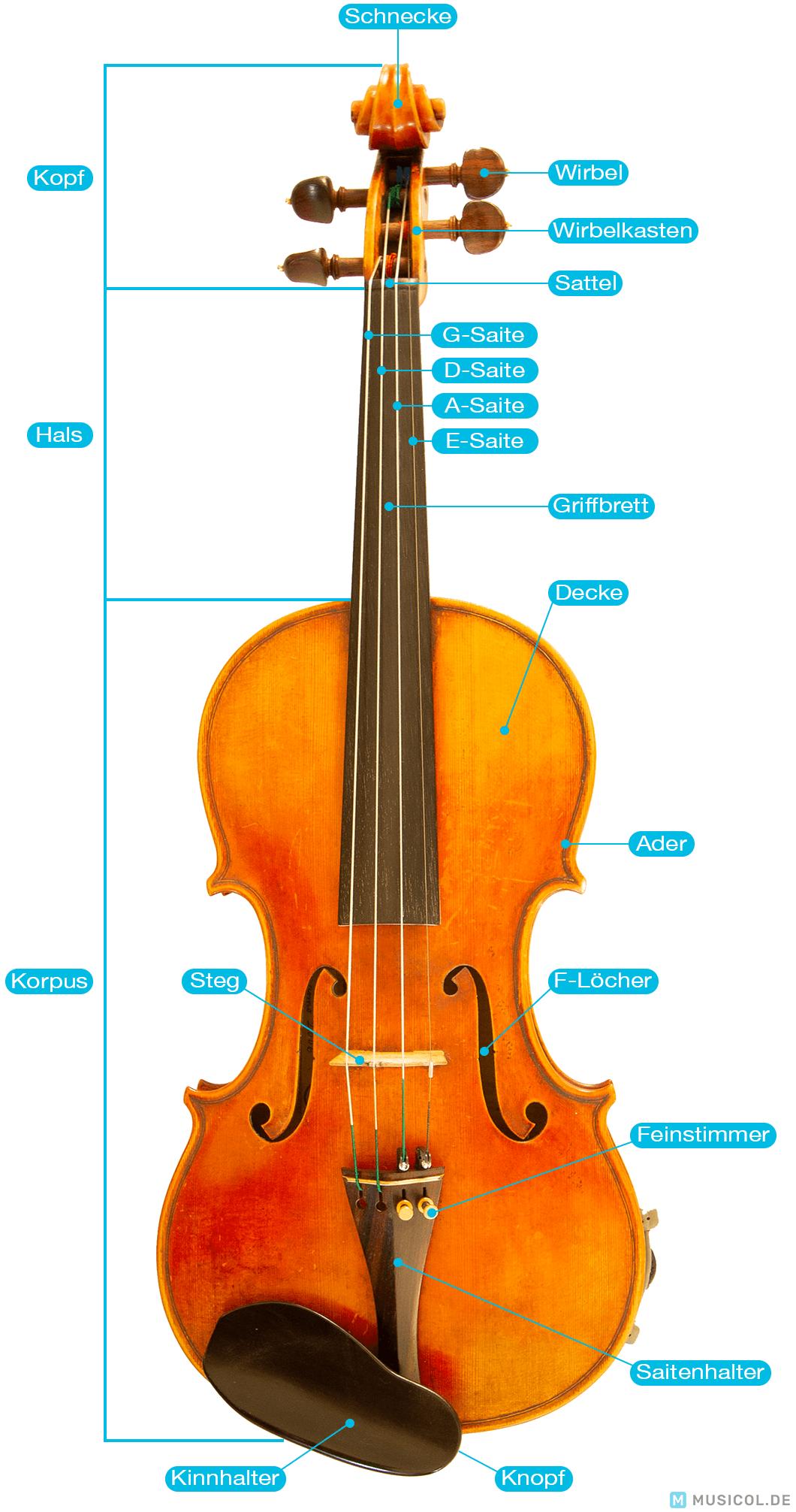 Geige lernen: Den Aufbau der Geige kennenlernen